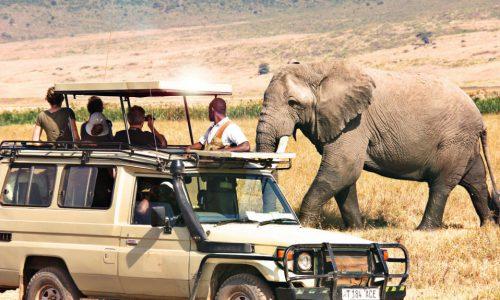 Short-safari-car